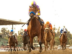 Switch in the 2010 La Brea Stakes.