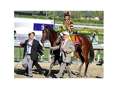 "Ramon Dominguez' 2012 victories included Little Mike in the Breeders' Cup Turf.<br><a target=""blank"" href=""http://photos.bloodhorse.com/BreedersCup/2012-Breeders-Cup/Turf/26130116_ZC6sF3#!i=2194151620&k=GddzTMK"">Order This Photo</a>"