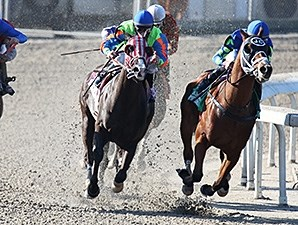 The Louisiana Kid wins the 2014 Louisiana Champions Day Starter Handicap.