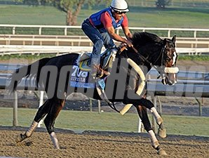 Diamond Bachelor works at Santa Anita for the Breeders' Cup.