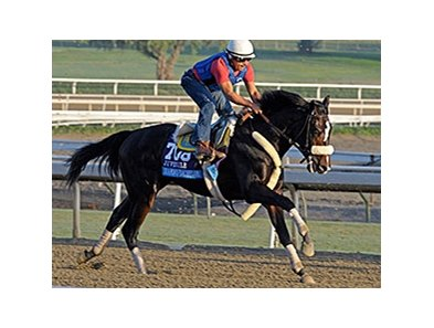 "Diamond Bachelor has post 12 in the Breeders' Cup Juvenile.<br><a target=""blank"" href=""http://photos.bloodhorse.com/BreedersCup/2013-Breeders-Cup/Breeders-Cup/32986083_QMHXWK#!i=2864240910&k=RF4hPcS"">Order This Photo</a>"