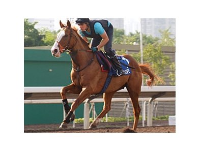 Cityscape drew post 12 in the Cathay Pacific Hong Kong Mile.