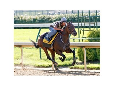 Mine That Bird, seen here in a previous work at Churchill Downs, turned in a sharp four-furlongs earlier this morning at Churchill.