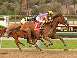 Candy Boy wins the 2014 Robert B. Lewis Stakes.