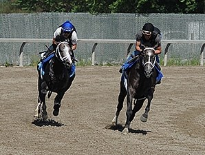 Incognito, outside, jogs at Belmont Park 6/2/2013.