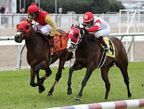 Up With the Birds wins the 2013 Black Gold Stakes.