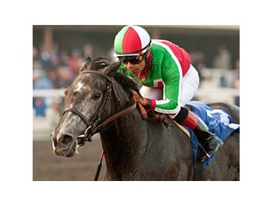 Lady of Fifty dominates the Bayakoa Handicap at Betfair Hollywood Park.