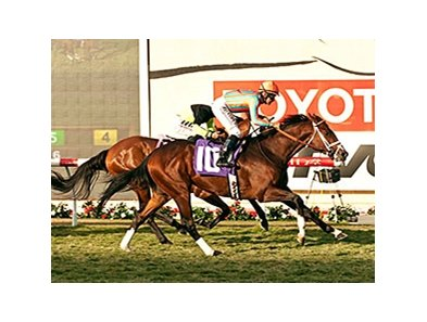 Conquest Typhoon won the 2014 Cecil B. DeMille Stakes at Del Mar.