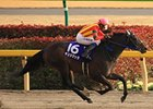 Testa Matta wins the February Stakes.