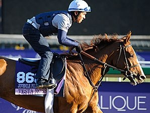 Testa Rossi - Breeders' Cup - 10/31/2013