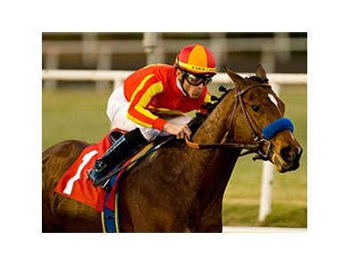 "Lookin At Lucky<br><a target=""blank"" href=""http://www.bloodhorse.com/horse-racing/photo-store?ref=http%3A%2F%2Fpictopia.com%2Fperl%2Fgal%3Fprovider_id%3D368%26ptp_photo_id%3D8709552%26ref%3Dstory"">Order This Photo</a>"