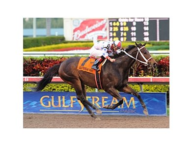 "Tackleberry seeks his fifth stakes victory in six starts in the Gulfstream Park Handicap.<br><a target=""blank"" href=""http://www.bloodhorse.com/horse-racing/photo-store?ref=http%3A%2F%2Fpictopia.com%2Fperl%2Fgal%3Fprovider_id%3D368%26ptp_photo_id%3D9403283%26ref%3Dstory"">Order This Photo</a>"