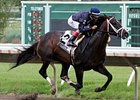 Verrazano Flies Home Alone in Pegasus Romp