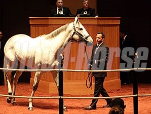 Discreet Marq at the Fasig-Tipton November Sale.