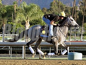 Poker Player - 2013 Breeders' Cup