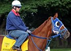 Summer Bird Gallops; 'Rachel' in Great Shape