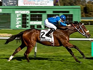 Stormy Lucy wins the 2013 Miss America Stakes.