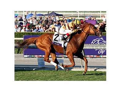 "Wise Dan's background is a bit atypical of most pedigrees featuring a double dose of Secretariat.<br><a target=""blank"" href=""http://photos.bloodhorse.com/BreedersCup/2012-Breeders-Cup/Mile/26128708_Rzcb63#!i=2194075650&k=F5VbCcx"">Order This Photo</a>"