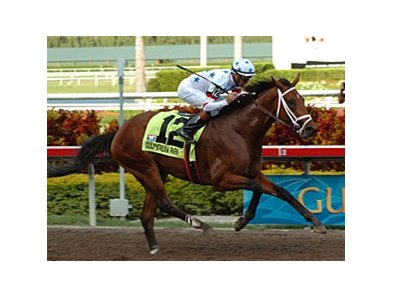 "Big Brown, runaway winner of the Florida Derby (gr. I). <br><a target=""blank"" href=""http://www.bloodhorse.com/horse-racing/photo-store?ref=http%3A%2F%2Fpictopia.com%2Fperl%2Fgal%3Fprovider_id%3D368%26ptp_photo_id%3D4008099%26ref%3Dstory"">Order This Photo</a>"