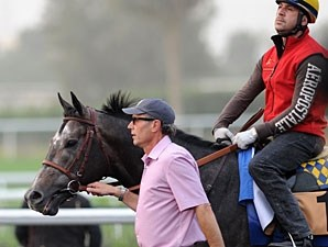 The Factor prepping for the Dubai Golden Shaheen.
