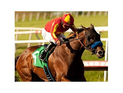 "Irish Gypsy takes on 4 in the Honorable Miss.<br><a target=""blank"" href=""http://www.bloodhorse.com/horse-racing/photo-store?ref=http%3A%2F%2Fpictopia.com%2Fperl%2Fgal%3Fprovider_id%3D368%26ptp_photo_id%3D9599679%26ref%3Dstory"">Order This Photo</a>"