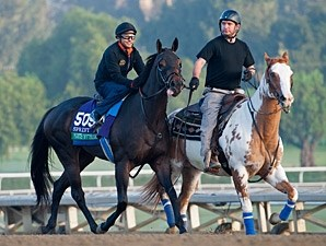Points Offthebench 2013 Breeders' Cup, October 26, 2013.