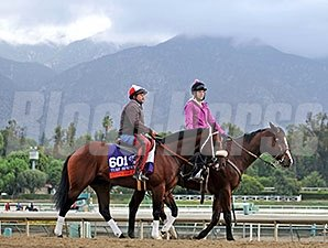 Chips All In works at Santa Anita for the Breeders' Cup.