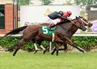 Lady Saxony (inside) won the first turf race of the 2012 Mountaineer season on Memorial Day.