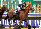 "Fresh off her Breeders' Cup Distaff and Eclipse Award victories, Ginger Punch is the one to beat in the Sunshine Millions Distaff.<br><a target=""blank"" href=""http://www.bloodhorse.com/horse-racing/photo-store?ref=http%3A%2F%2Fpictopia.com%2Fperl%2Fgal%3Fprovider_id%3D368%26ptp_photo_id%3D2632161%26ref%3Dstory"">Order This Photo</a>"