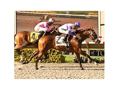 Concave fights off She's a Tiger to win the Sorrento.