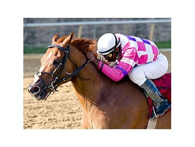 Eighttofasttocatch was made the 7-5 morning line favorite for the Maryland Million Classic.