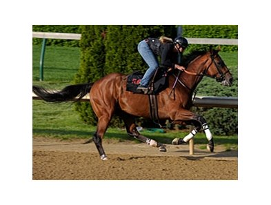 "Big Brown working at Churchill Downs on May 1, 2008.<br><a target=""blank"" href=""http://www.bloodhorse.com/horse-racing/photo-store?ref=http%3A%2F%2Fpictopia.com%2Fperl%2Fgal%3Fprovider_id%3D368%26ptp_photo_id%3D4366831%26ref%3Dstory"">Order This Photo</a>"