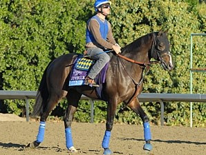 Title Contender Breeders' Cup 2012