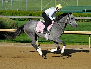 Flashy Gray - Churchill Downs, April 26, 2013.