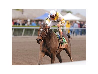 "Aurora Lights upsets the Sabin Stakes under Cornelio Velasquez.<br><a target=""blank"" href=""http://www.bloodhorse.com/horse-racing/photo-store?ref=http%3A%2F%2Fpictopia.com%2Fperl%2Fgal%3Fprovider_id%3D368%26ptp_photo_id%3D8813145%26ref%3Dstory"">Order This Photo</a>"