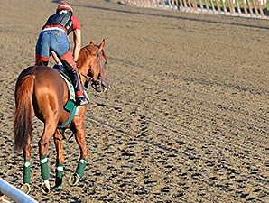 California Chrome at Belmont Park June 2.