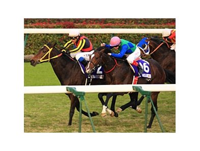 Buena Vista's victory in the Japan Cup showed again the dominance of Japanese runners at home.