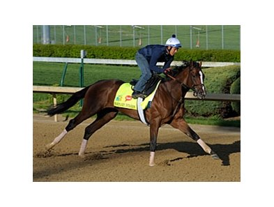 "Normandy Invasion<br><a target=""blank"" href=""http://photos.bloodhorse.com/TripleCrown/2013-Triple-Crown/Kentucky-Derby-Workouts/29026796_jvcnn8#!i=2478553949&k=JRcXCmR"">Order This Photo</a>"