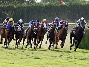 Sweet Little Lion wins the 2013 Hollywood Wildcat Stakes.