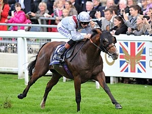 Olympic Glory wins the 2013 Queen Elizabeth II Stakes.