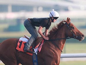Medicean Man - Dubai March 25, 2013.
