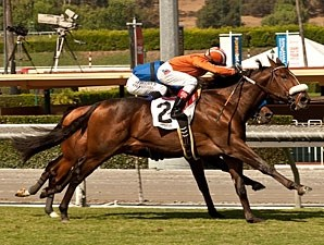 Gervinho wins the Zuma Beach Stakes.