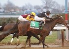 Arena Elvira