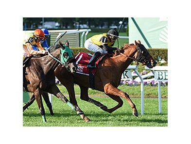 "Ring Weekend is the morning-line favorite for the Twilight Derby.<br><a target=""blank"" href=""http://photos.bloodhorse.com/AtTheRaces-1/At-the-Races-2014/i-GbZFG7G"">Order This Photo</a>"