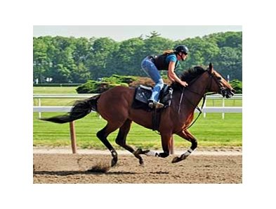 "Big Brown worked five furlongs in one minute at Belmont Park on June 3.<br><a target=""blank"" href=""http://www.bloodhorse.com/horse-racing/photo-store?ref=http%3A%2F%2Fpictopia.com%2Fperl%2Fgal%3Fprovider_id%3D368%26ptp_photo_id%3D4719305%26ref%3Dstory"">Order This Photo</a>"