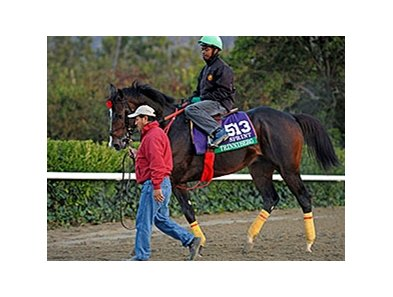 "Trinniberg<br><a target=""blank"" href=""http://photos.bloodhorse.com/BreedersCup/2013-Breeders-Cup/Breeders-Cup/32986083_QMHXWK#!i=2869602926&k=8zSgDVf"">Order This Photo</a>"