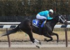 Cicada Draws Six 3-Year-Old Fillies