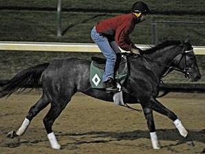 Unrivaled Belle Horse Profile Bloodhorse