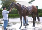 Big Brown gets a bath after his April 24 workout at Palm Meadows Training Center in Florida.