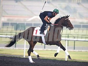 Royal Delta - Dubai, March 25, 2013.